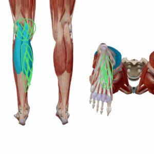 腓腹筋の内側頭のトリガーポイント